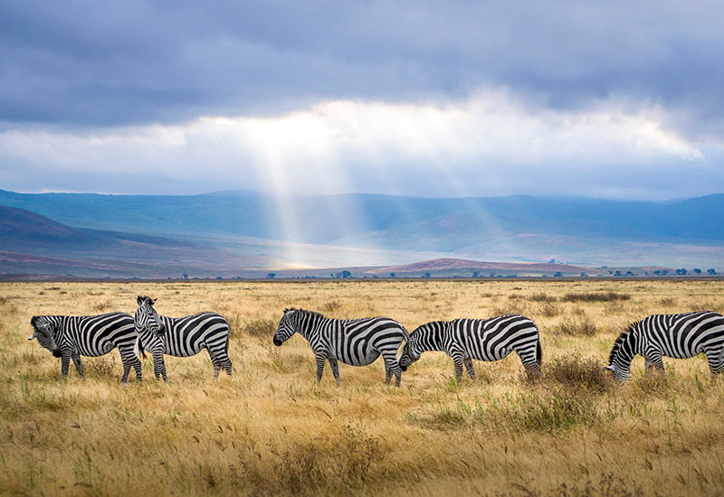 east-africa-wildlife-excursions
